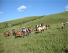 Grassland Tour